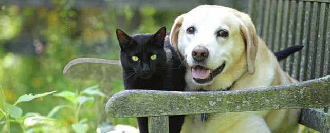 photo of a cat and dog